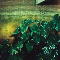 Artificial light on some wet plants. Didn't know what to expect but the film held up pretty well.